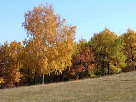 Осень. Автор - Rustam