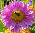 Пчелка. Автор - Rustam